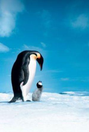 Pingvinresan poster