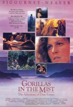 De dimhöljda bergens gorillor poster