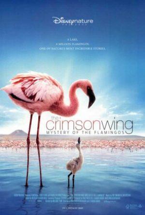 Den röda vingen - Flamingons gåtfulla liv poster